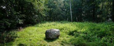 Камень Wi-Fi в лесу