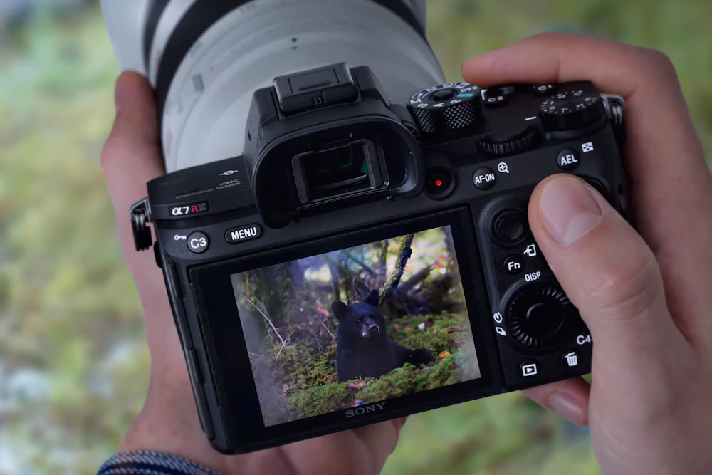 Что значит полнокадровые фотокамеры