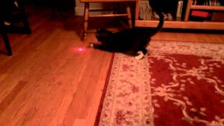 Кот и лазер