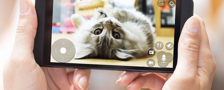 Котёнок в телефоне.