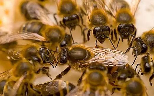 Общение организованных насекомых вдохновляет разработчиков