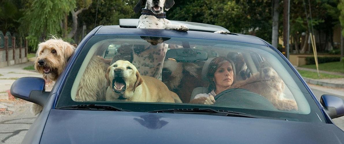 Подборка автомобилей для заядлых собачников