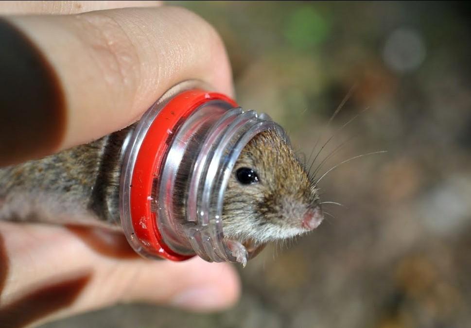 мышь в бутылке